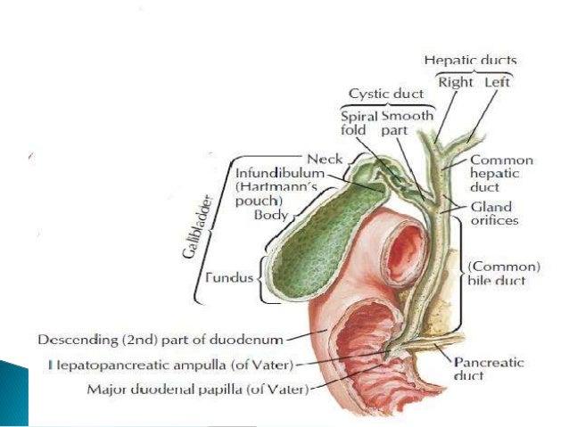 Bile Duct Injuries (BDIs)