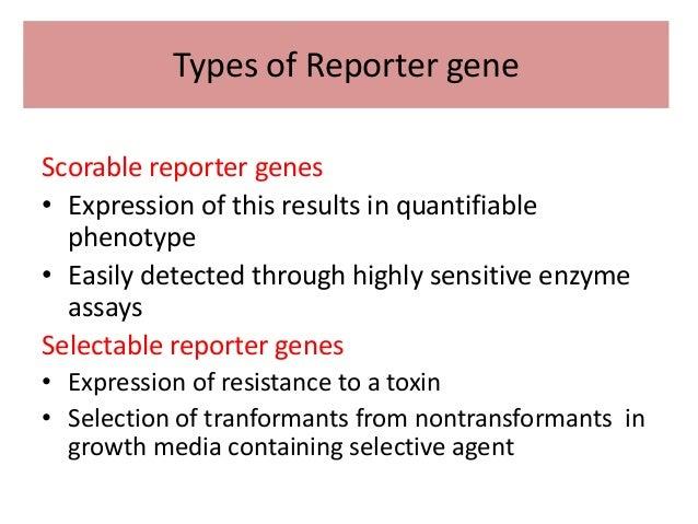 reporter gene
