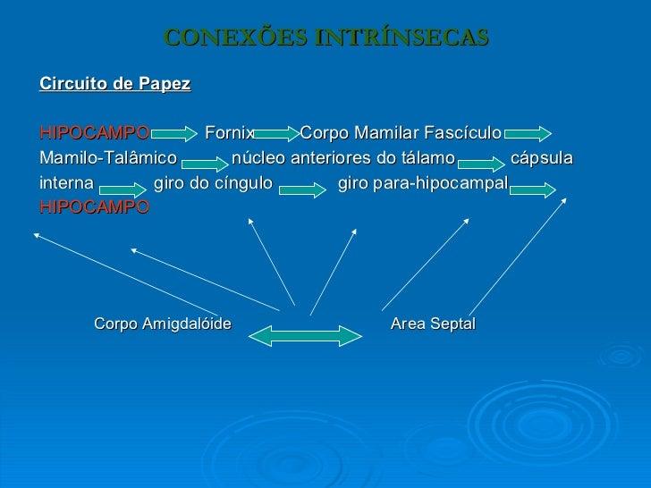 Circuito De Papez : Cópia de sistema límbico