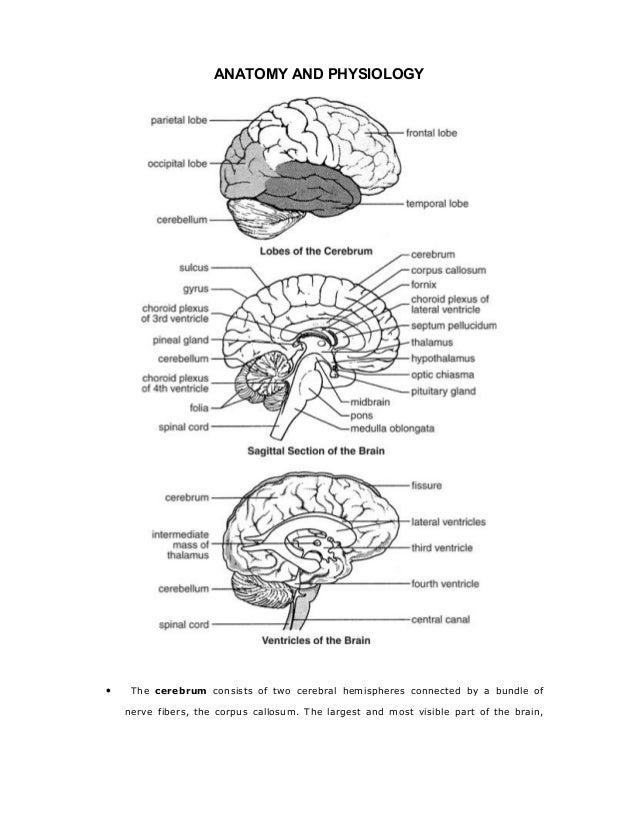 Cerebral Concussion:casepre