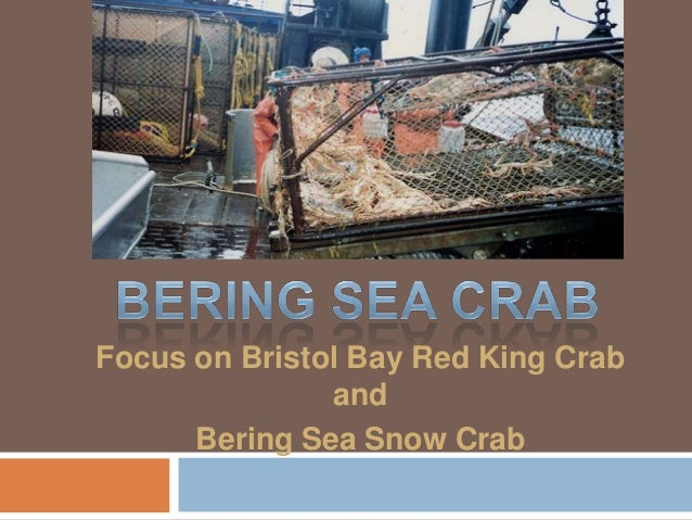 Focus on Bristol Bay Red King Crab               and      Bering Sea Snow Crab