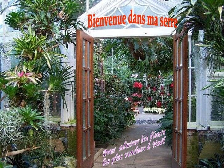 Bienvenue dans ma serre Pour  admirer les fleurs  les plus vendues à Noël