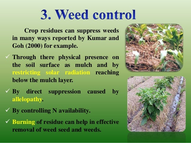 weed control management in crop production essay J bangladesh agril univ 13(2): 221–228, 2015 issn 1810-3030 soil weed seed bank: importance and management for sustainable crop production- a review.