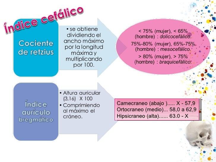 Camecraneo(abajo).....X-57,9 Ortocraneo(medio)...58,0 a 62,9 Hipsicraneo(alta)......63.0-X