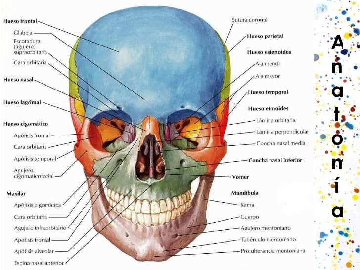 Rx de cráneo