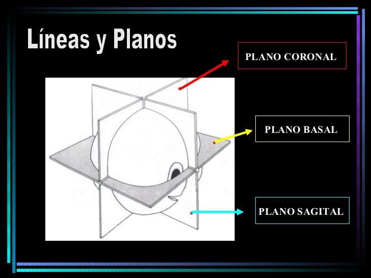 Líneas y Planos PLANO CORONAL   PLANO BASAL   PLANO SAGITAL