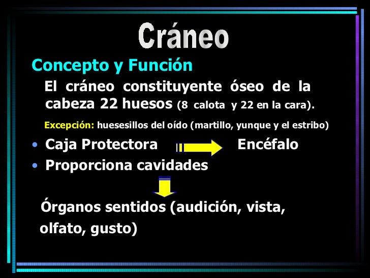 <ul><li>Concepto y Función </li></ul><ul><li>El  cráneo  constituyente  óseo  de  la cabeza 22 huesos  (8  calota  y 22 en...