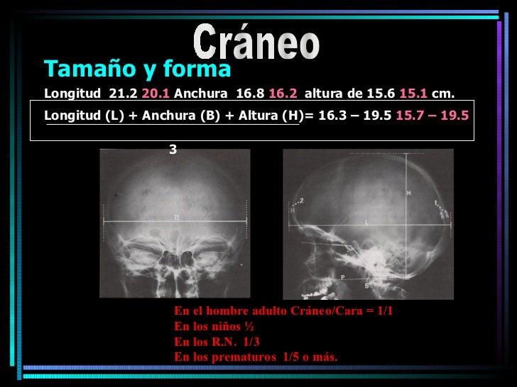 <ul><li>Tamaño y forma </li></ul><ul><li>Longitud  21.2  20.1  Anchura  16.8  16.2   altura de 15.6  15.1  cm. </li></ul><...