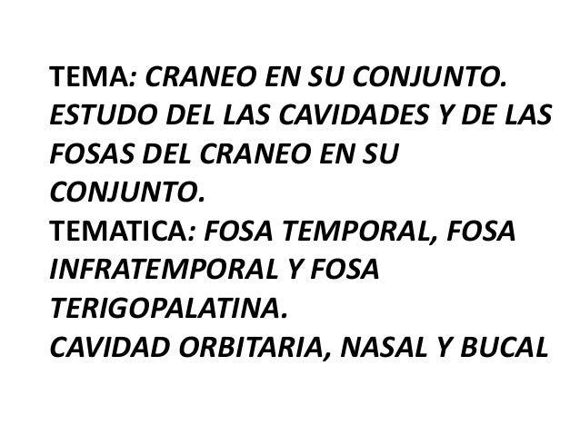 TEMA: CRANEO EN SU CONJUNTO. ESTUDO DEL LAS CAVIDADES Y DE LAS FOSAS DEL CRANEO EN SU CONJUNTO. TEMATICA: FOSA TEMPORAL, F...