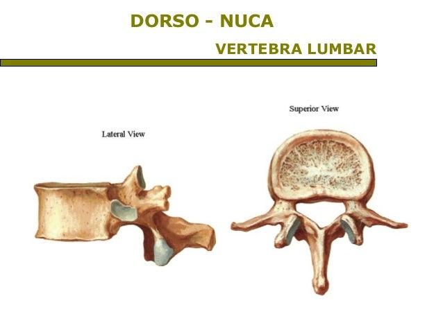 Craneo y columna vertebral
