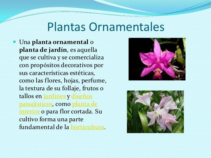 significado de plantas ornamentales clasificaci n de