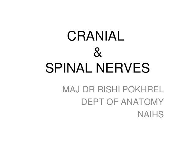 CRANIAL & SPINAL NERVES MAJ DR RISHI POKHREL DEPT OF ANATOMY NAIHS
