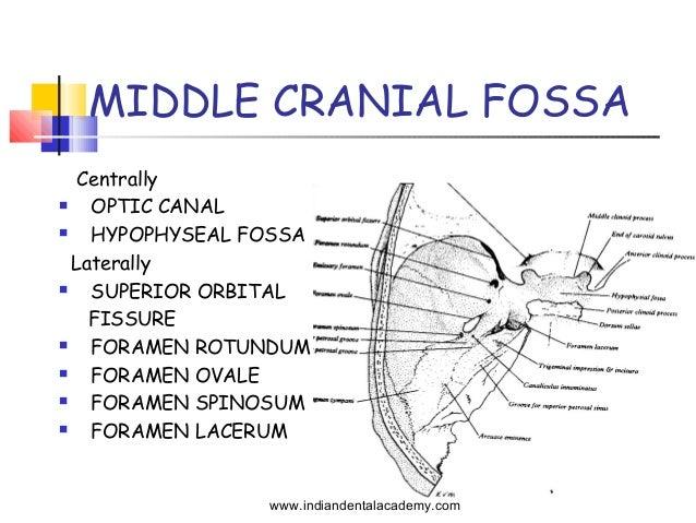 Cranial base