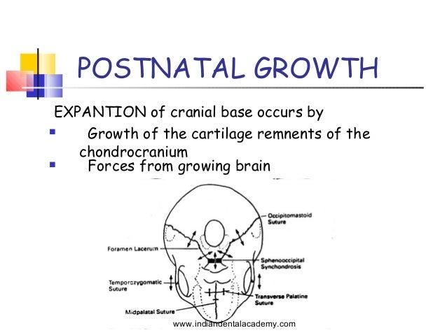 Cranial Base 4 This paper reviews the relationship between cranial base synchondroses and craniofacial development. cranial base 4