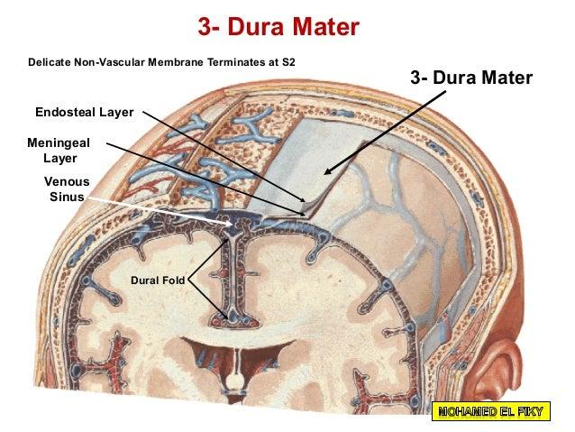 Dura Matter Diagram Block And Schematic Diagrams