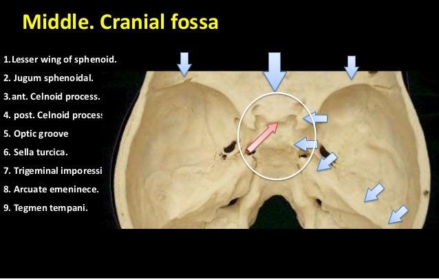 cranial cavity + skull cap, Human Body