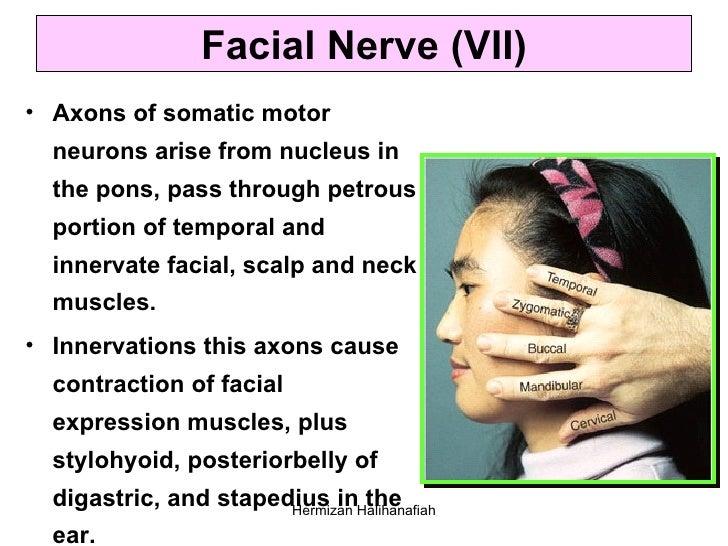 Trigeminal nerve anatomy.