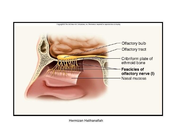 Cranial Nerve
