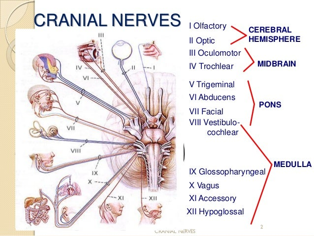 Cranial Nerve Assessment Simple And Easy To Perform For