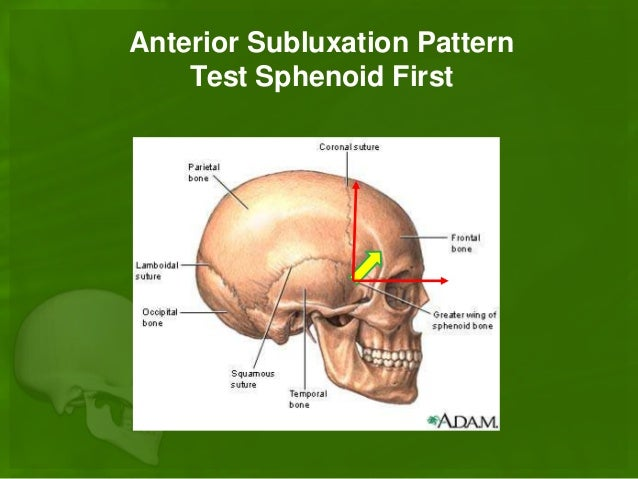 sphenoid bone adjustment – brownshelter, Human Body