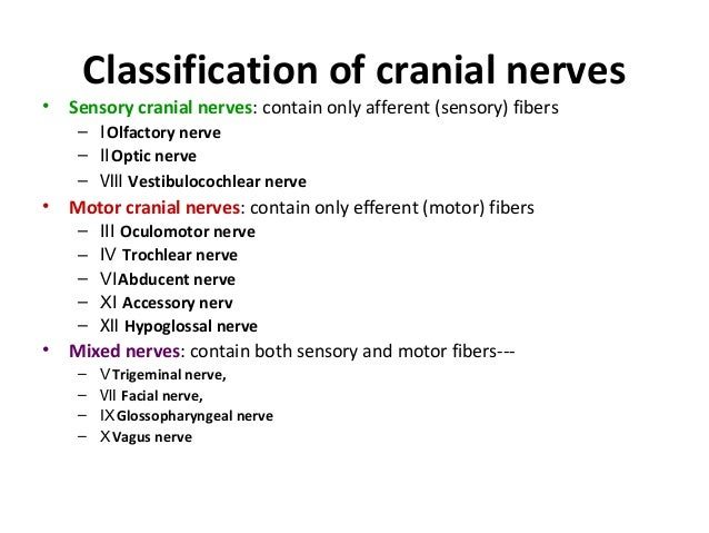 Image result for cranial nerves sensory motor both