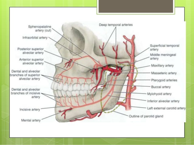 differential diagnosis of diseases of the oral mucosa