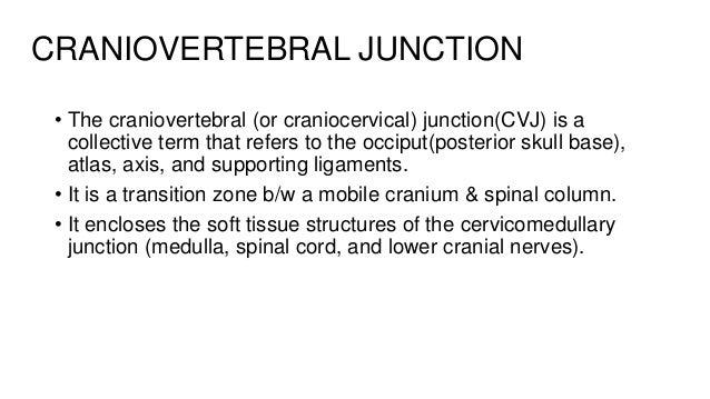Craniovertebral junction anatomy