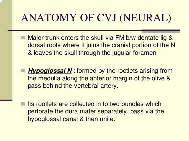 Craniovetebraljunction