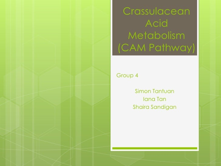 Crassulacean Acid Metabolism (CAM Pathway)<br />Group 4<br />Simon Tantuan<br />Iana Tan<br />ShairaSandigan<br />