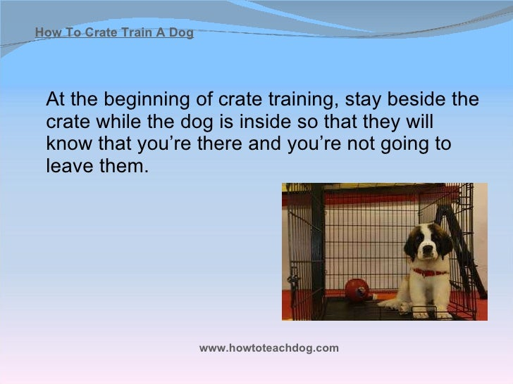 How To Crate Train Your Dog Quickly