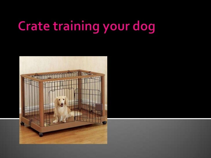    Where dogs originally were used to sleeping   Pros of crate training your dog   Possible disadvantages to crate trai...