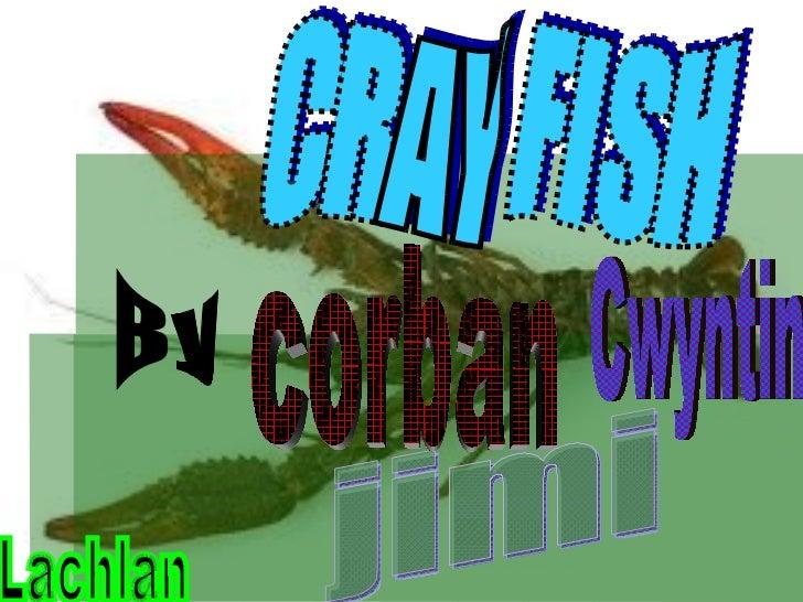 CRAY FISH By jimi Lachlan Cwyntin corban