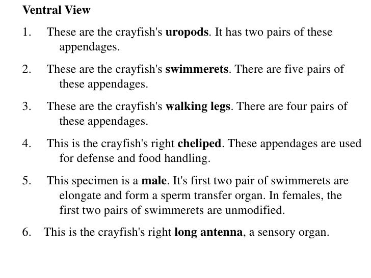 Crayfish dissection diagrams – Crayfish Dissection Worksheet Answers