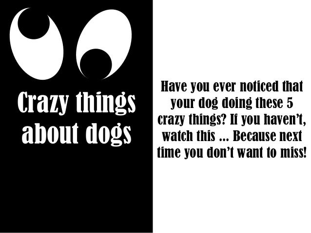 Crazy things about dogs Have you ever noticed that your dog doing these 5 crazy things? If you haven't, watch this ... Bec...