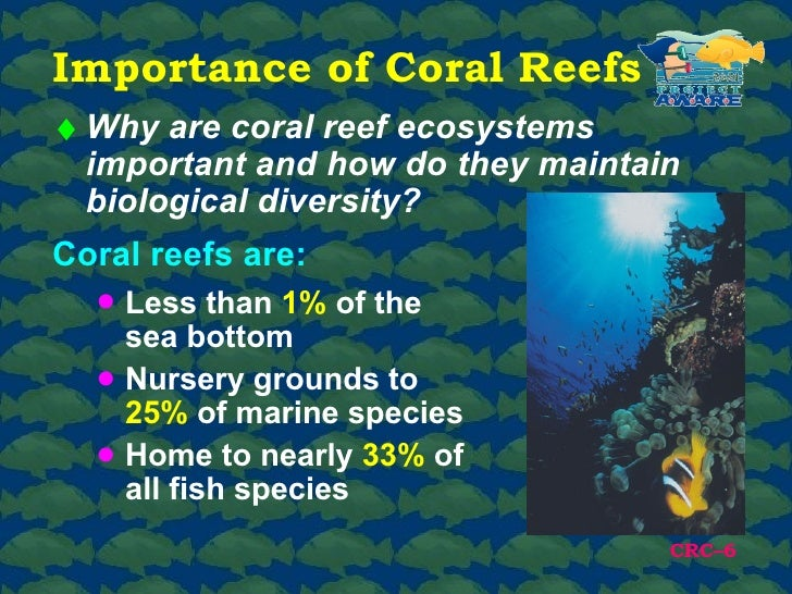 importance of coral reef Coral reef fisheries importance of reef fisheries significant cultural and spiritual importance coral reef commercial and recreational fisheries in the us.