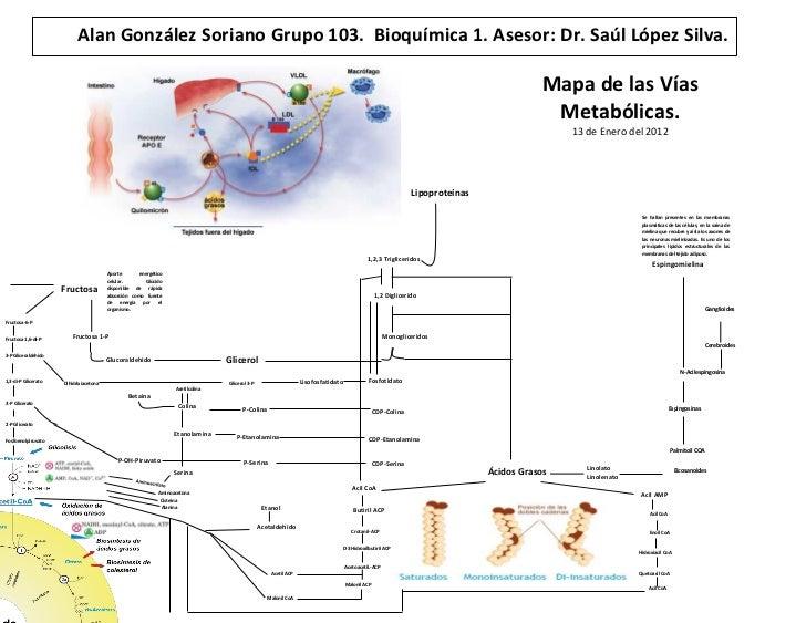 vias metabolicas anabolicas