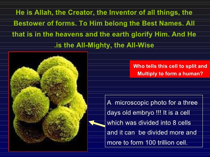 Creation of human ( an ebm of what written 1431 year ago in quran )