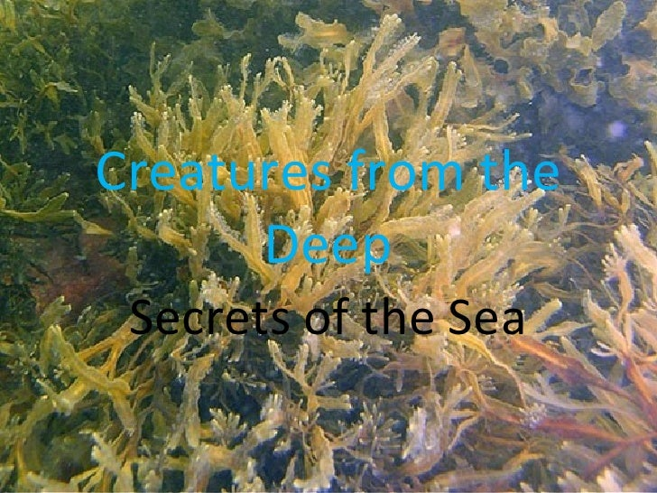 Creatures from the Deep Secrets of the Sea