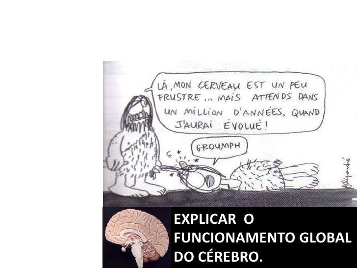 EXPLICAR  O FUNCIONAMENTO GLOBAL DO CÉREBRO.<br />