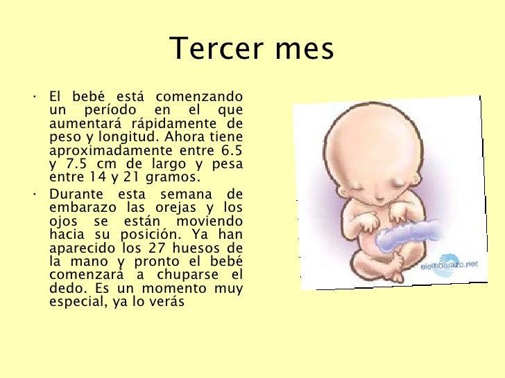 El desarrollo del feto semana a semana - natalben.com