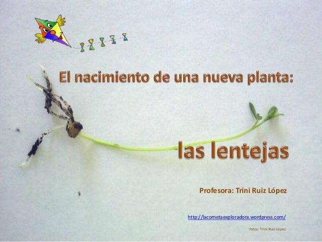 Profesora: Trini Ruiz López  http://lacometaexploradora.wordpress.com/  Fotos: Trini Ruiz López