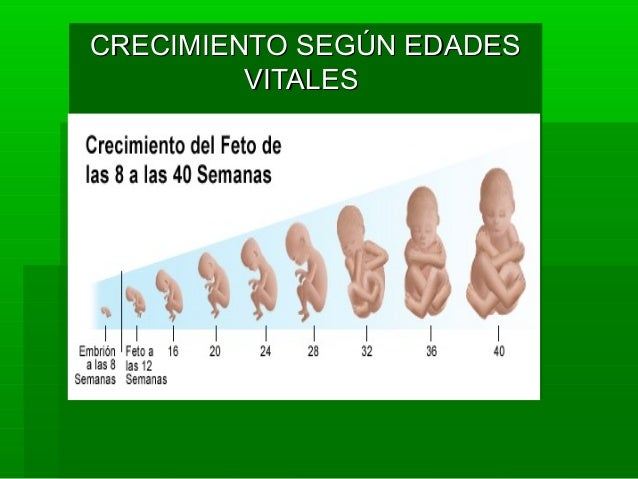 tamaños de penes por edades
