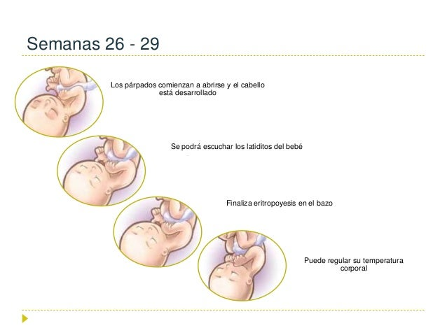 8124adab8 Crecimiento y desarrollo fetales