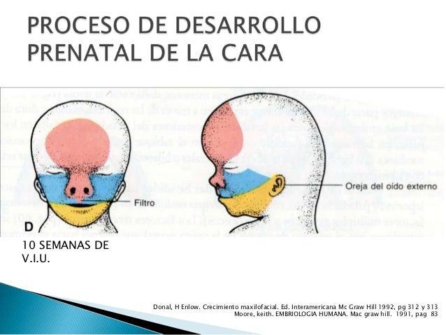 Crecimiento y desarrollo prenatal de la cara final