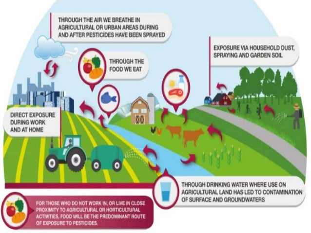Effects of Pesticides