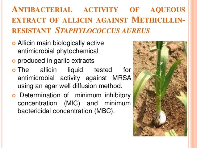 antimicrobial activity of plant extracts thesis Antibiotic activity of some plant extracts on pseudomonas syrinoae pv this thesis has been submitted for examination with 24 antimicrobial activities of plant extracts 14 2 test plants used 17 chapter three.