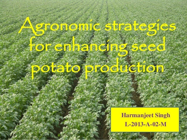 Agronomic strategies for enhancing seed potato production Harmanjeet Singh L-2013-A-02-M