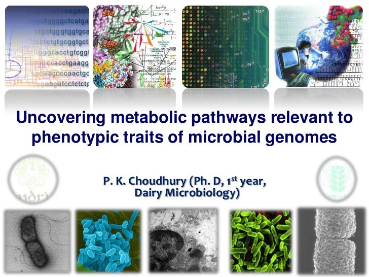 Uncovering metabolic pathway relevant to phenotypic traits of microbial genomes Slide 2