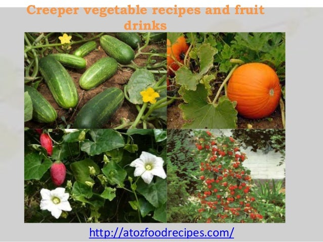Creeper Vegetable Recipes And Fruit Drinks