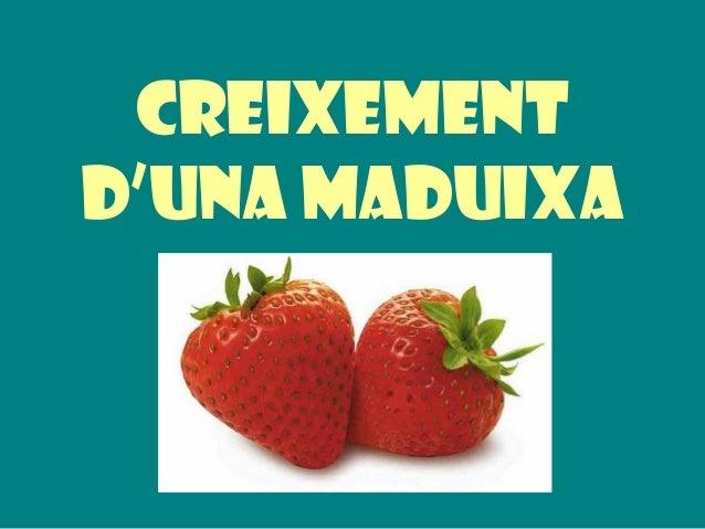 CREIXEMENT D'UNA MADUIXA